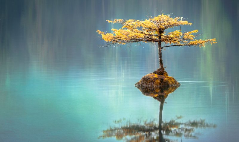 tree-in-pond
